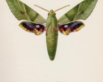 Green Moth Vintage Illustration. Digital Download, science, illustration, wings, fairy, instant, transfer, image, craft, angel, #15/P2/EMB