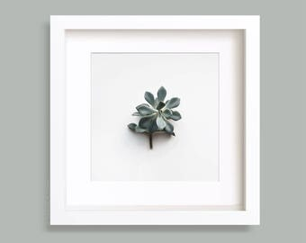 Succulent Plant Photography, Echeveria, Botanical Print, Greenery, Minimalist Photo, Gallery Wall, Nature Photo, Square Art Prints, Wall art