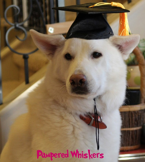 Graduation Cap for dogs and cats/Dog Graduation Hat