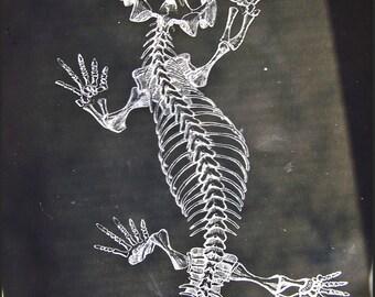 Antique Negatives, Anatomical Slides, Skeleton Negatives, Study Project,