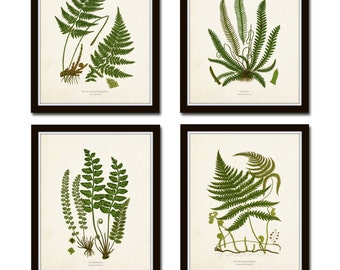 Vintage Fern Print Set No. 32, Giclee, Collage, Botanical Art, Print Sets, Vintage Fern Prints, Illustration, Vintage Botanicals, Art Print