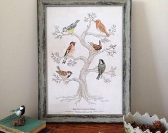 British Garden Birds A3 Print