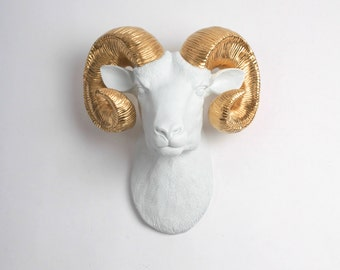 XL White Ram Head Wall Mount w/ Gold Horns - The XL Darby - Faux Taxidermy - Chic & Trendy Ram's Head - White Faux Taxidermy Ram Wall Decor