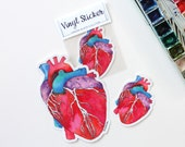 Anatomical Heart, Laptop stickers, vinyl stickers, bumper sticker, science, Anatomical Heart Sticker, science sticker, cool sticker