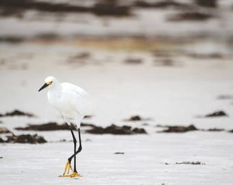 beach photography - snowy egret beach life