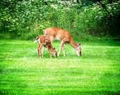 Cerf Print, photographie animalière, photo, photographie de Nature, bébé imprimés, Photo de cerf, Nature impressions, imprimer des animaux, la Nature impression cerf