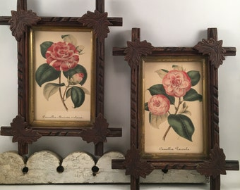 Antique lithographs Camellia's