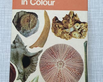 Fossils in Colour Blandford Colour book Series by J F Kirkaldy