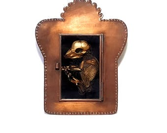 real mummified fetal pig oddity taxidermy shadowbox