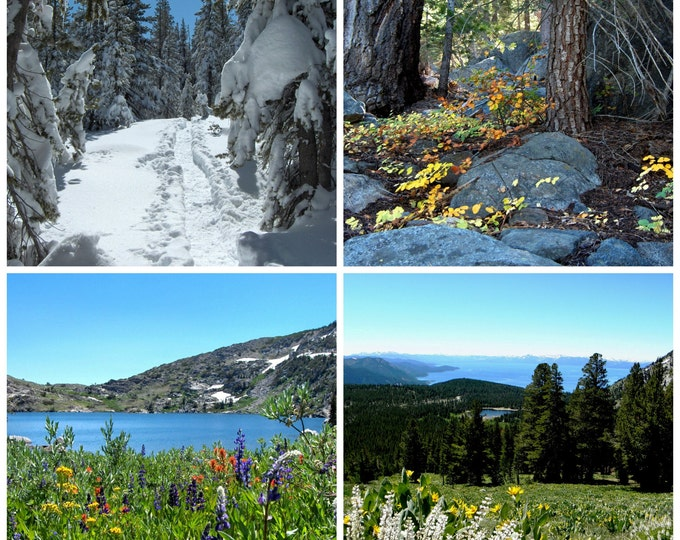 FOUR SEASON Photo Greeting Cards by Pam's Fab Photos featuring Meadows and Trails in a 4-piece set