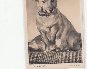 PM 1956 Welsh Corgi Dog Waiting To Charm You And Cuddle Vintage Postcard