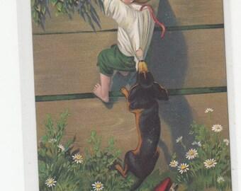 Dachshund Dog Catches Boy At The Fence Under Orange Trees Above Daisies Below ,Antique Postcard