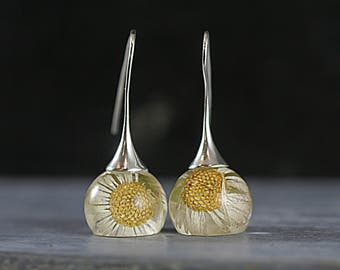 925 Real daisy earrings. Dried daisies in resin spheres. Sterling Silver earwires. Big earrings. Gift for her. Summer jewelry.