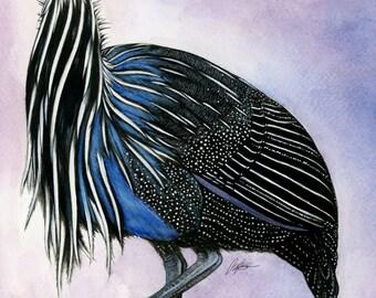 Vulturine Guinea Fowl Art Print