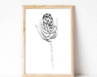 wall decor, black and white, minimalist print, botanical print, protea, australian natives, flowers
