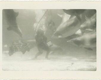 "Vintage Photo ""Feeding Aquarium Friends"" Snapshot Antique Photo Black & White Photograph Found Paper Ephemera Vernacular - 61"