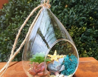 Hanging terrarium/succulent terrarium/beach themed/succulent garden/succulent wedding decor/party favor/terrarium/succulent planter