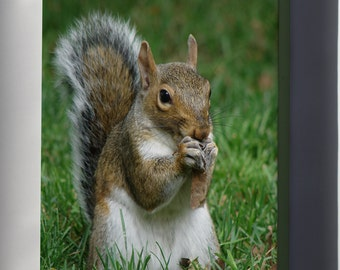 Canvas 24x36; Gray Squirrel (Sciurus Carolinensis) With Maple Tree Seed