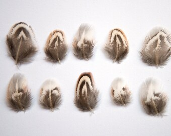 10 x Small Natural White, Black and Grey Striped Pheasant Feathers Tiny 2 - 3cm UK