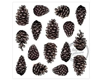 Pinecones print