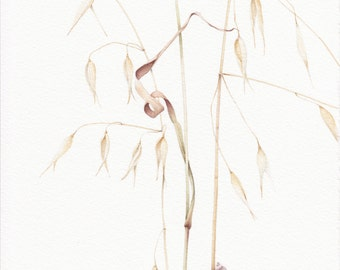 WEEDS. ORIGINAL WATERCOLOR on 100% cotton paper.Botanical Watercolor. Wild grass. Oats. Snail.