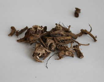 Echinacea Dried Roots (Homegrown)