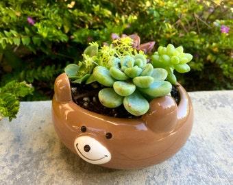 Cute Brown Bear Planter with Succulent Arrangement (Plants Included!)