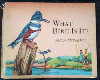 What Bird Is It, Anna Pistorius, 1945, Vintage Childrens Book