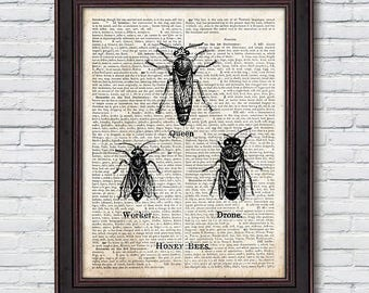 Honey Bees Dictionary Print, Honey Bee, Vintage Insect Poster, Vintage Decor, Dictionary Print - DI034