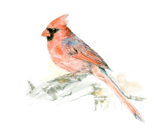 Red Cardinal watercolor painting - bird watercolor painting - 5x7 inch print - 0085
