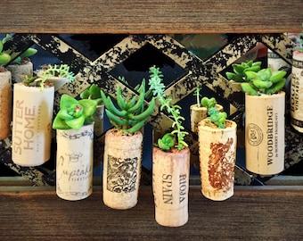 Wine Cork Succulent Bouquets w/ Moss + Free Gift!