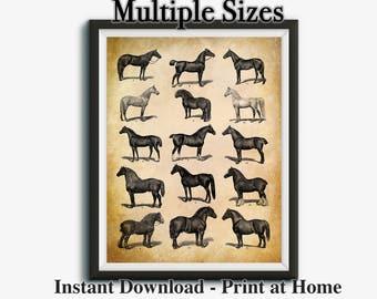 Horse Art, Vintage Horse Print, Farmhouse Decor, Western Decor Printable Art, Farm Animals, Farm Decor, Instant Download, Printable Art