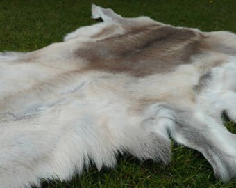 XL Real Reindeer Skin   Hide   Rug   Pelt   100% Natural   Taxidermy