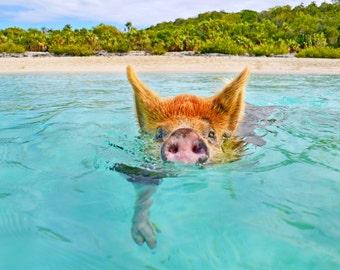 Wild Pig Bahamas Beach Fine Art Photograph Home Decor 5x7 8x10 11x14 16x20 24x30