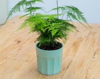 French Style Ceramic Planter Plant Pot