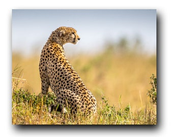 Cheetah, Cheetah Picture, Cheetah Photo, Cheetah Print, Maasai Mara, Wild Cat, Big Cat, Hunter Picture,Hunter Photo,African Art,Wild Cheetah