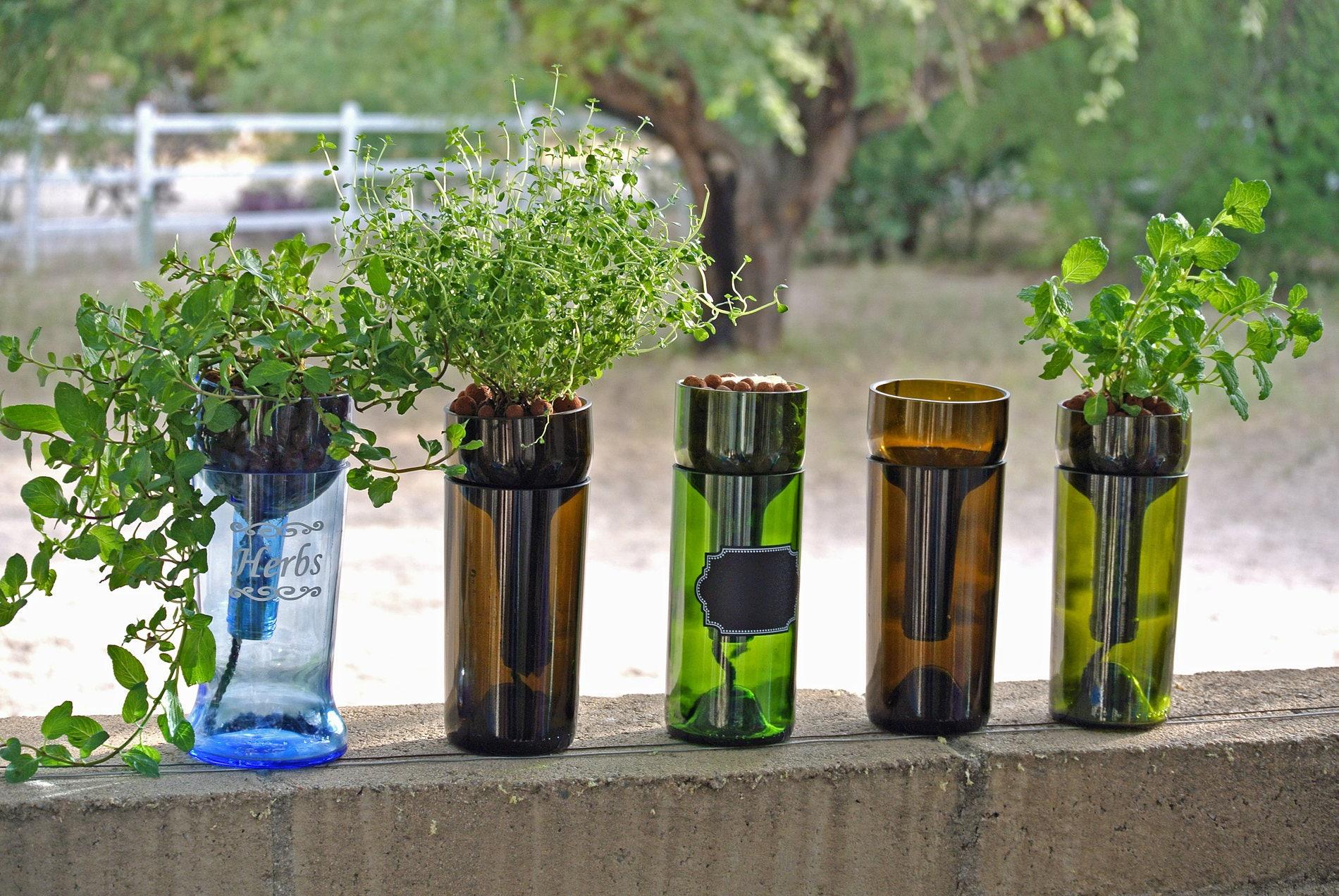 Hydroponic Garden In Wine Bottle / Indoor Herb Garden / Wine Gift Bottle  Planter / Herbs