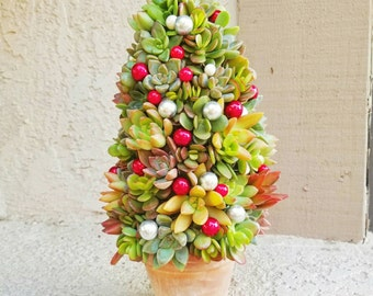 Unqiue one of a kind living Succulent Christmas tree with rustic pot