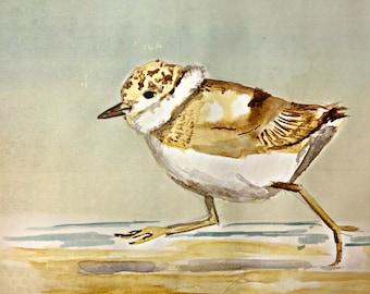 piping plover watercolor print, piping plover art, sand piper, beach, bird art, baby bird, beach birds