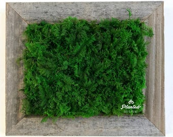 13.25'' x 11.25'' Preserved Moss Fern Plant Wall Hanging (Maintenance Free!)
