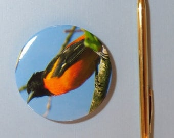 Baltimore Oriole Magnet