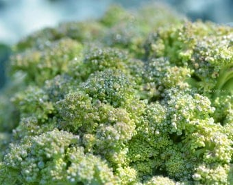 Broccoli Print, Broccoli Photography, Macro Photography, Kitchen Art, Kitchen Poster, Vegetable Photography, Vegetable Decor, Fine Art