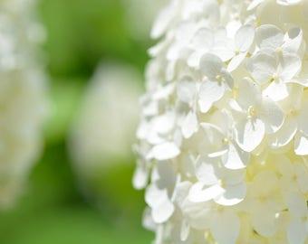 Hydrangea Print, Hydrangea Photography White Hydrangeas, Macro Photography, Fine Art Photography, Garden Art, Flower Decor, Hydrangeas