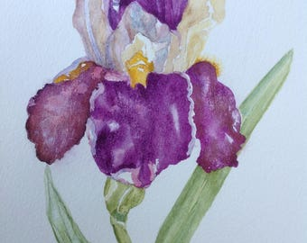 "Original Watercolour Painting PURPLE BEARDED IRIS Watercolour Flowers, Wall Art, Kitchen Wall Art, Purple Flowers, Watercolor Iris ,10""x7"""