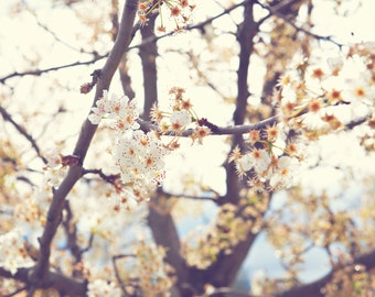 Spring Blossoms, Bokeh, blur, Sunlight, Soft, Macro, photography, canvas, Trees,