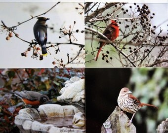 Folded Blank Note Cards, Wild Bird Photo Card, Robin Photo Card, Thrasher Photo Card, Cedar WaxWing Card, Cardinal Photo Card