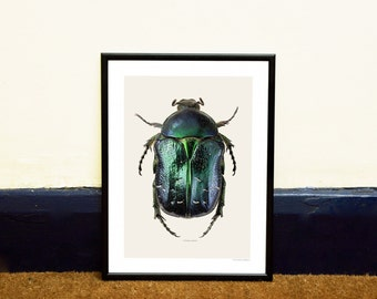 Blue Beetle Framed Insect Photo Print