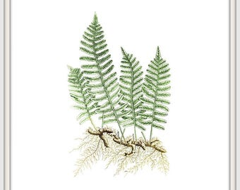 Fern Print Botanical Poster Vintage Fern Printable Fern Wall Decor Digital Print Instand Download