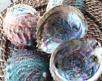 Pink and/or Teal Abalone Shells for Smudging or for Sacred Offering Dish