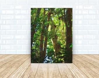Rainforest Way